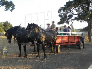 Horse drawn wagon rides sponsored by the Lake County Horse Council were a new addition this year.